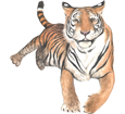 Imagen Tigre